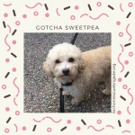 2018_Sweetpea