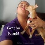 Gotcha Bambi