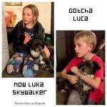 Gotcha_Luca