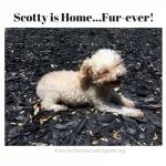20160521_Scotty