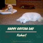 20170521_Fisher