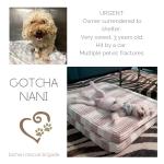 20190627_Gotcha_Canelo_Now_Nani