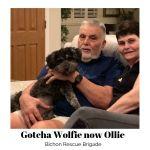 20190901_Gotcha_Wolfie_nowOllie-2