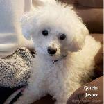 20200118_Gotcha_Jasper-2