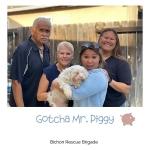 20200424_Gotcha_Piggy-2