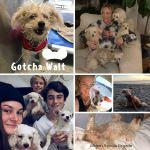 20200516_Gotcha_Walt-2