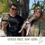 20201107_Gotcha_Milly_now_Gizmo
