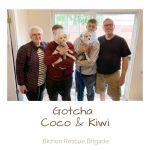 20210606_Gotcha_Coco_Kiwi